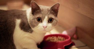 Симптомы тениоза у животных
