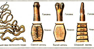 Описание опистархоза