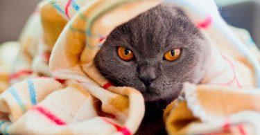 Правила лечение животных дома