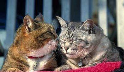 Лечение кошек и собак дома