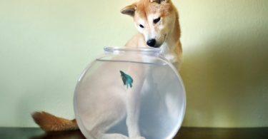 Интересные истории из жизни животных