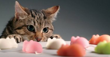 Диеты для кошек