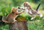 Чем полезна активность животных