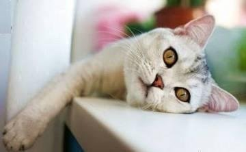 Причины заболевания печени у животных