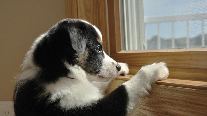 Симптомы депрессии у животных