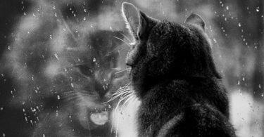 Рекомендации по лечению депрессии у животных