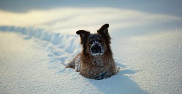 Холодно ли зимой собакам и кошкам