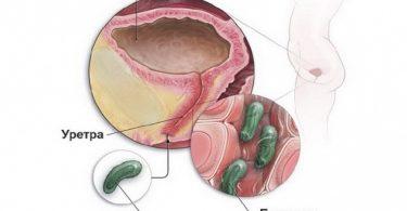 Инфекционное заражение мочевых путей питомца