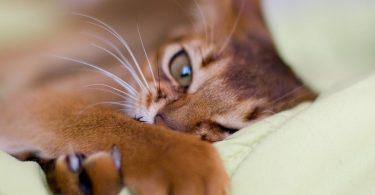 Что делать с когтями у кошек