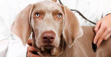 Симптомы крапивницы у собак и кошек