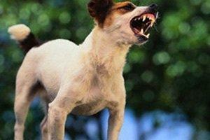 Что беспокоит собаку, когда она лает