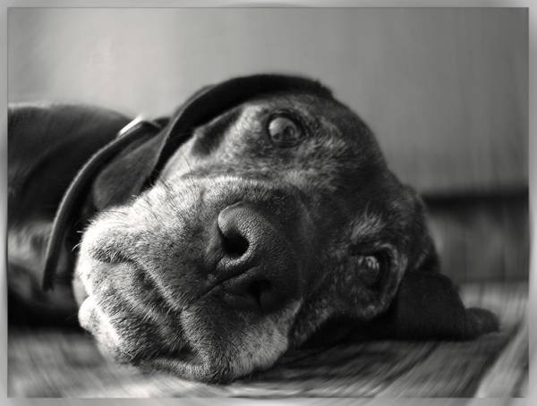 Причины метеоризма у собак и кошек