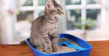 Воспитание кошки (кота)
