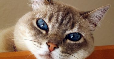 Может ли у животных быть аллергия на еду