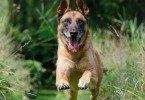 Причины повышенной возбудимости у животных