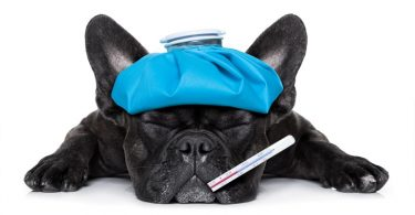 Средства от высокой температуры у собак и кошек