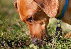 Как отучить собаку есть отходы жизнедеятельности