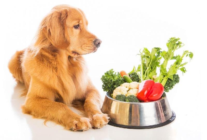 Плохой аппетит у собаки (кошки)