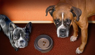 Лечение плохого аппетита у домашних животных