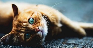 Как вернуть аппетит кошке (собаке)