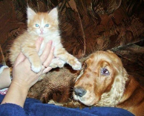 Если собака или кошка ревнует хозяина
