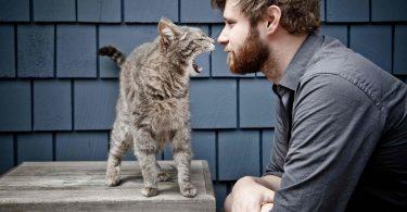 Котята (щенки) ревнуют хозяина