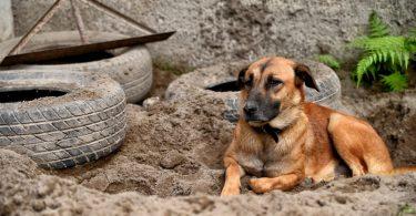 Если собака роет ямы в земле