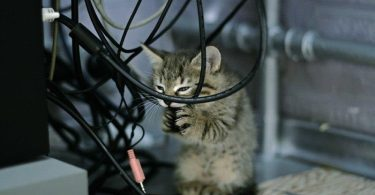 Если котенок (кот) ест вещи или одежду