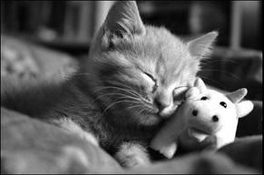 Чтобы кошка больше не жевала вещи