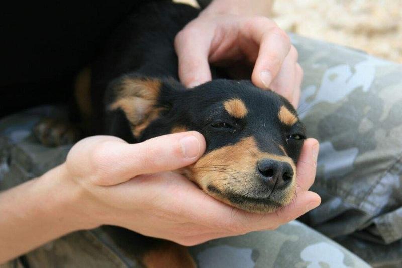 Зачем массаж животным