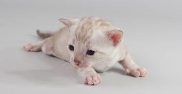 Лечение и уход за лапами кошек и собак