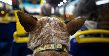 Причины укачивания собаки в поезде