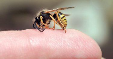 Укус осы опасен ли для животного