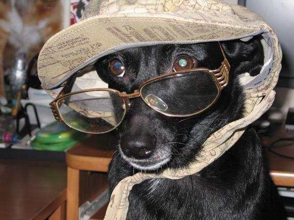 Зрение собак