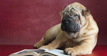 Что делать если ослепла собака или кошка
