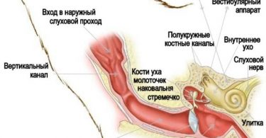 Как понять, что у собаки (кошки) болит ухо