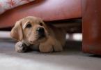 Средство от фобии для животных