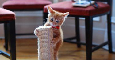 Если кошка (кот или котенок) царапает мебель
