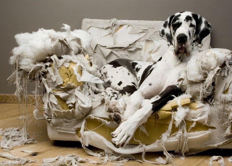 Собака портит мебель, что делать