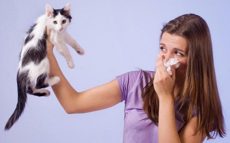 Что делать при аллергии на животных