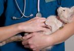 Ветеринарное лечение питомца