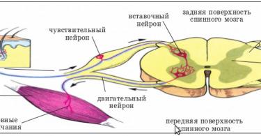 Нервная система при ожоге