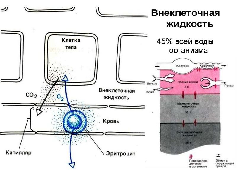 Объем внеклеточной жидкости при ожогах