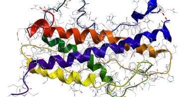 Влияние гормонов на величину ожогового отека