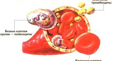 Число лейкоцитов при ожоге