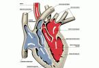 Функции сердца при ожоге