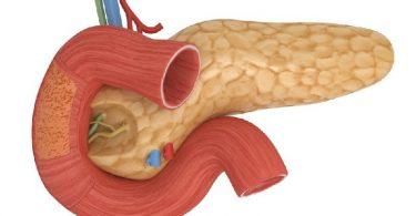 Функции поджелудочной железы при ожоге