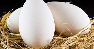 Состав и польза гусиных яиц
