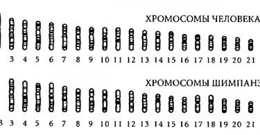 Количество хромосом у человека