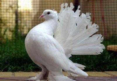 Псевдочума птиц